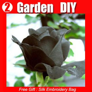 Pack 100+ Flowers Seeds Black Rose Seed China Lover Popular Gift