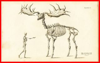 Giant Elk Fossil Skeleton Vintage Diagram Chart METAL Wall Plaque