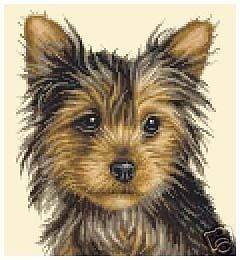 YORKSHIRE TERRIER dog   FULL counted cross stitch kit