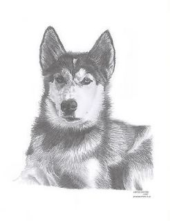 SIBERIAN HUSKY dog drawing art Limited Edition picture print by UK