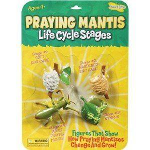 Insect Lore Praying Mantis Life Cycle Stages   Set of 4 Figures