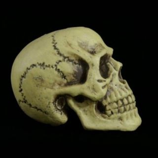 Marcus Giant 12 Lightweight Skull Skeleton Halloween Prop AM674