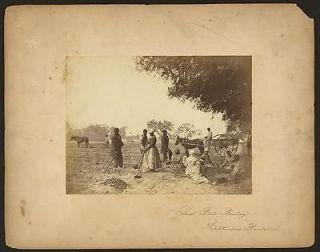 Sweet potato planting,Hopkinsons Plantation