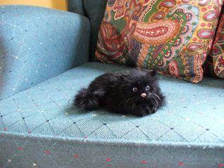 REALISTIC KITTY CAT kitten FURRY ANIMAL REPLICA toy c397bl FREE