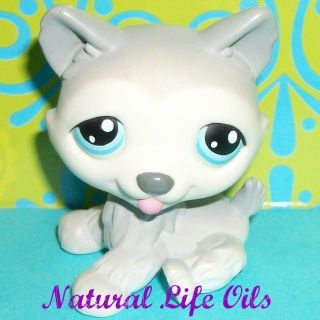 Littlest Pet Shop~#70 GRAY & WHITE HUSKY POLAR PUPPY DOG Blue Eyes