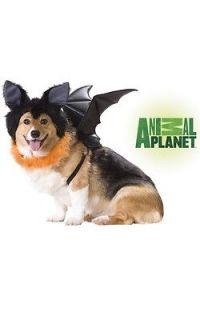 Brand New Animal Planet Bat Pet Dog Halloween Costumes Black 20103