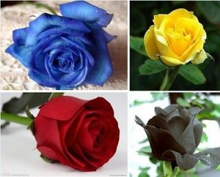 Color Rose Seed Red Yellow Blue Black Total 80 Seeds For Your Lover