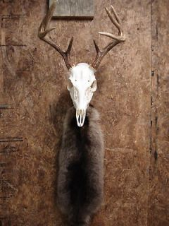 European Skull Mount Bracket Antler Deer Hook Hanger