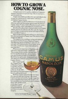 1977 PRINT AD CAMUS NAPOLEON COGNAC HOW TO GROW A COGNAC NOSE