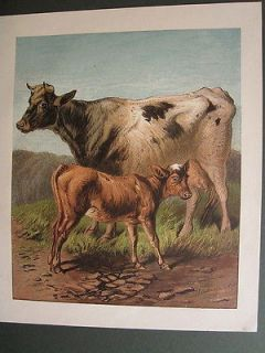 COW WITH CALF CATTLE FARM ANIMALS ANTIQUE PRINT 1870 by HARRISON WEIR