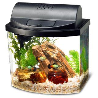Et jeblik i livet af rytteren 5 gallon fish tank filter 2 5 for Fish tank heater petsmart