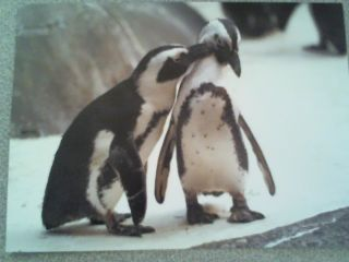 Anniversary Greeting Card Penguins Wishing Special Couple a Very
