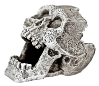 Mini 2 Cracked Human Skull Replica 816 ~ aquarium ornament fish tank