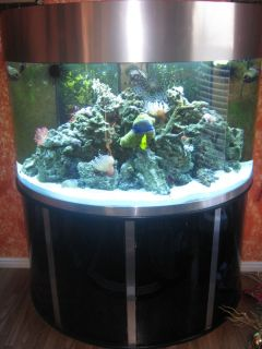 saltwater fish tank aquarium tropical fish anemone live rock tank set