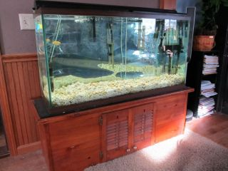65 Gallon Aquarium Fish Tank with Wood Base Stand