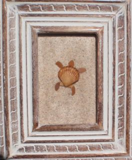Real Sea Beach Glass Art Nautical Decor One Shell Sea Turtle