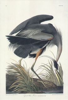 JOHN JAMES AUDUBON bird print GREAT BLUE HERON