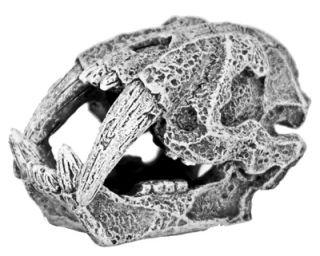 Mini 2 Saber Tooth Tiger Skull 855 Aquarium Ornament Fish Tank