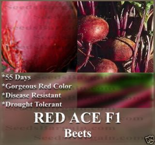 Beets Seeds Red Ace Big Yields Sweet Tender RARE