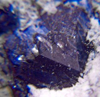 20 Sharp Royal Blue Benitoite Crystals on 2Matrix CA