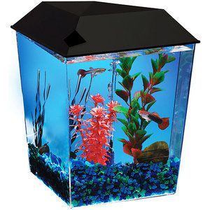 Hawkeye 1 Corner Tank Betta Fish Aquarium 1 Gallon