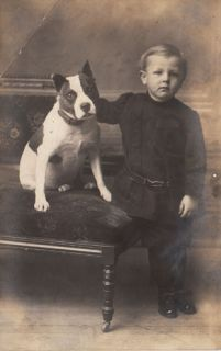 Antique Photo Boy w Dog Pitbull Bully Dog Staffordshire Bull Terrier