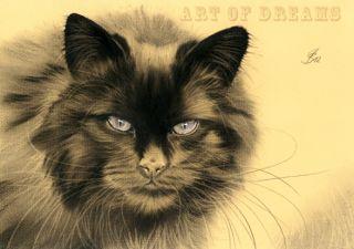 Black Cat Schwarze Katze Kitten Kitty Chat Gato Feline Kater Kätzchen
