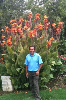 Tiger Canna Lily Rhizomes Flower Bulbs Planta Added Orders Can Get
