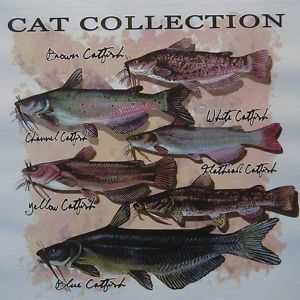 Catfish Collection White Flathead Yellow Fish Shirt