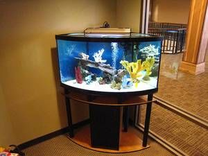 50 Gallon Corner Aquarium