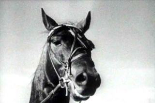 History of Horse Racing in The 1900s Dan Patch Film