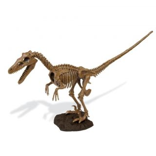 Enterprises Dino Velociraptor Kit Tricera Skeleton Dinosaur