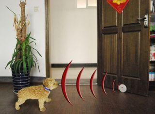 Indoor Dog Cat Wireless Fence Pet Dog Barrier System Pets manager