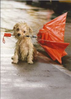 Avanti Mutt Dog Rescue Greeting Cards Card Various