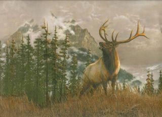 Elk river wallpaper border lodge rustic cabin for The range wallpaper sale