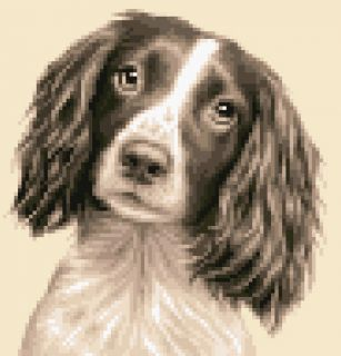 Springer Spaniel Dog Complete Counted Cross Stitch Kit