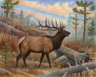 Moose Elk Posters Wildlife Hunting Wall Decor Prints