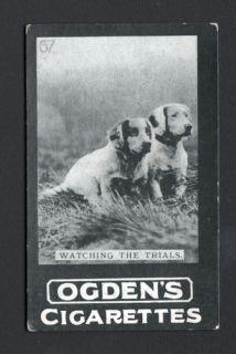 DOG Springer Spaniel English Puppies Photo Trading Card 1902