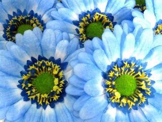 10X BIG Pink Gerbera Daisy Heads Artificial Silk Flowers Wedding lot 3
