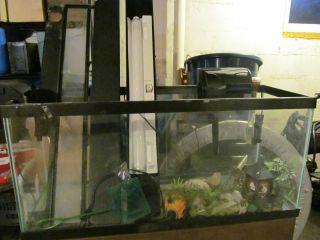 40 Gallon Aqaurium Fish Tank Stand Lights Filter Isolation Tank