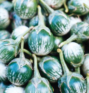 """Kermit"" Eggplant Seeds Solanum Melongena Multi Qty"