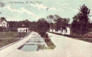 used 1914 postcard titled fish hatchery st paul minn this postcard