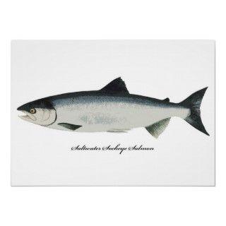 Wild Saltwater Sockeye Salmon Fish Print