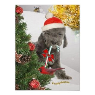 Christmas Poster featuring tiny Bedlington Santa dressed in Santa Hat