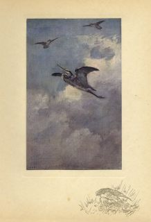 Falconry Hawking A Flight at A Heron Antique Color 1909 Birds Sporting