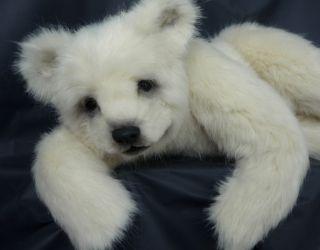 Realistic Polar Bear German Artist Britta Helberg