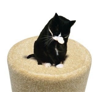 Tree Condo Post Cat Scratcher Tower Toy Climber Pet Furniture