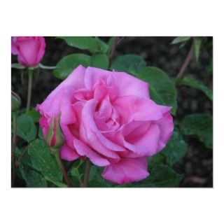 McCartney Hybrid Tea Rose 168 Posters