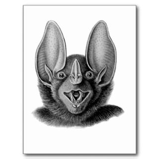 False Vampire Bat Post Cards