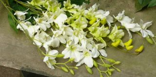 38 PURPLE GREEN WHITE ARTIFICIAL WEDDING SILK CATTLEYA ORCHID FLOWER